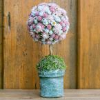 Rózsaszín gömbfa kerámiakaspóban